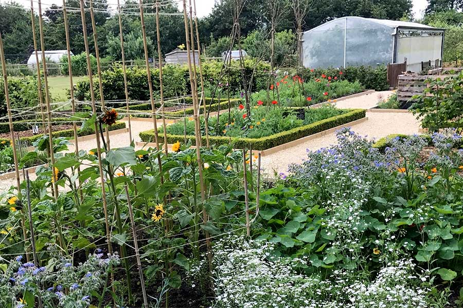 CHRIS COLLINS - The Organic Gardening Experience