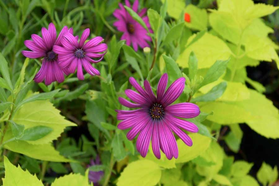 Great Dorset Plant Fair - Abbotsbury Subtropical Gardens