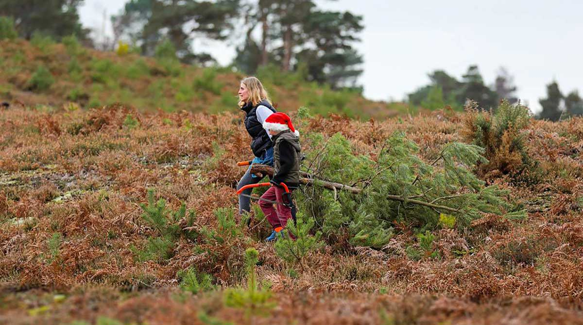 Arne - Pull a Pine for Christmas 2019