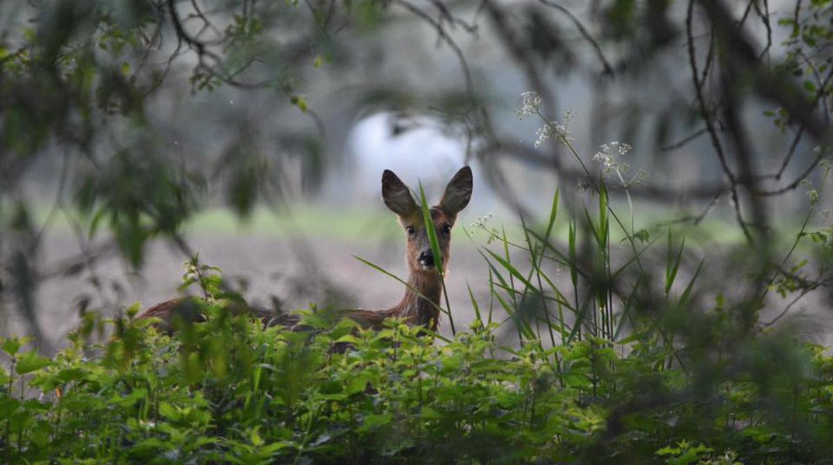 Wednesday Nature Walx Corfe
