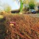 Introduction to Hedge Laying