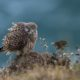 Wildlife of the Dorset Coast - Online Talk