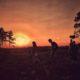 Slepe Heath Nightjar Experience